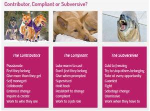 Contributor Compliant Subversive
